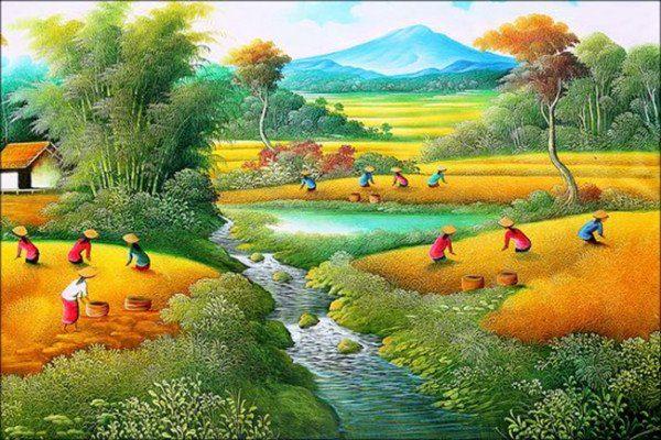 Đồng lúa quê hương vào vụ thu hoạch